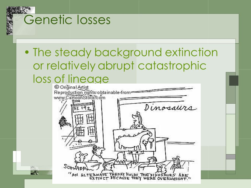 Genetic losses The steady background extinction or relatively abrupt catastrophic loss of lineage