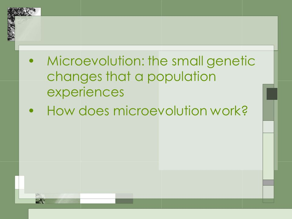 Microevolution: the small genetic changes that a population experiences