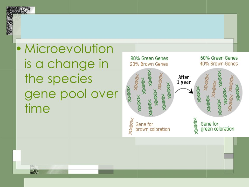 Microevolution is a change in the species gene pool over time