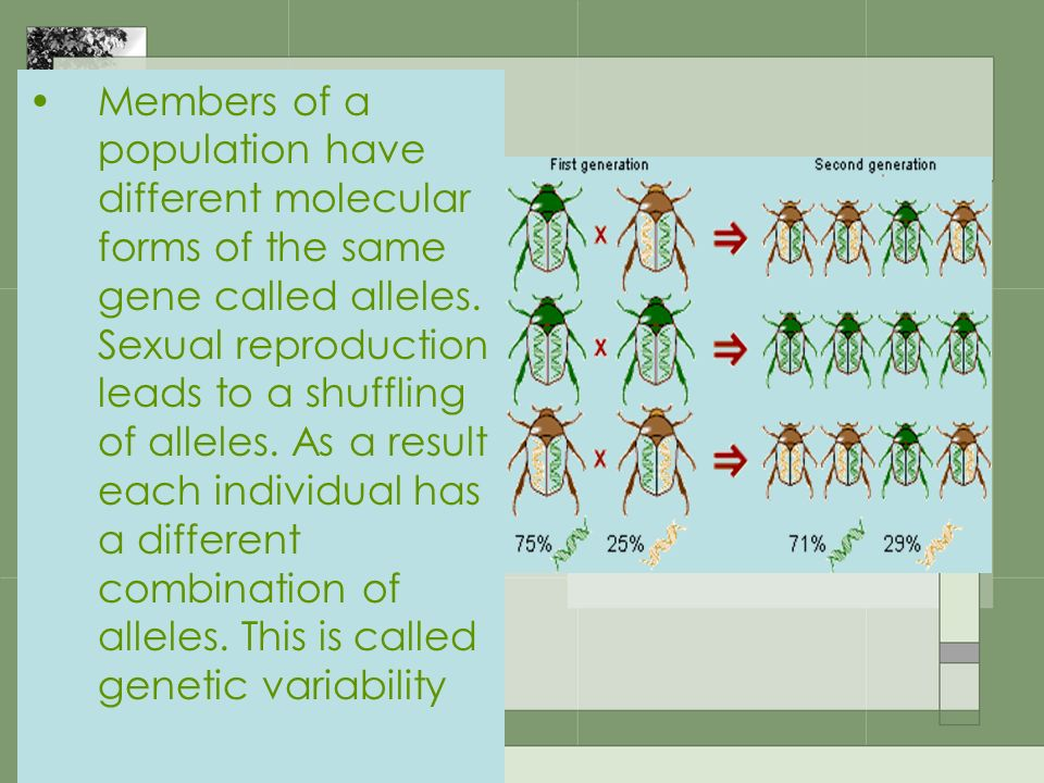 Members of a population have different molecular forms of the same gene called alleles.