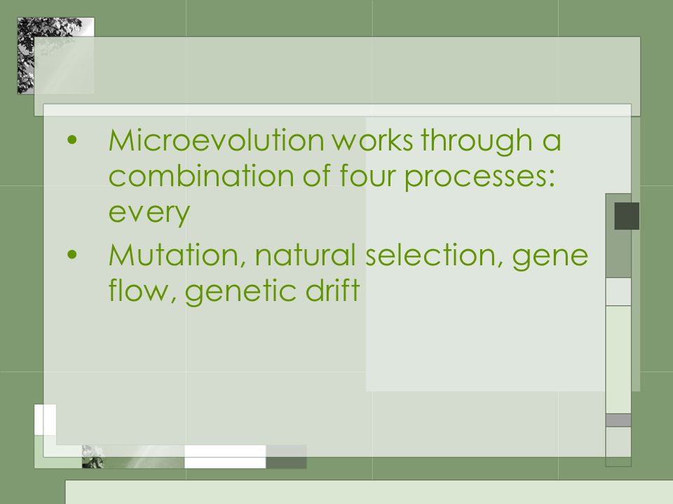 Microevolution works through a combination of four processes: every