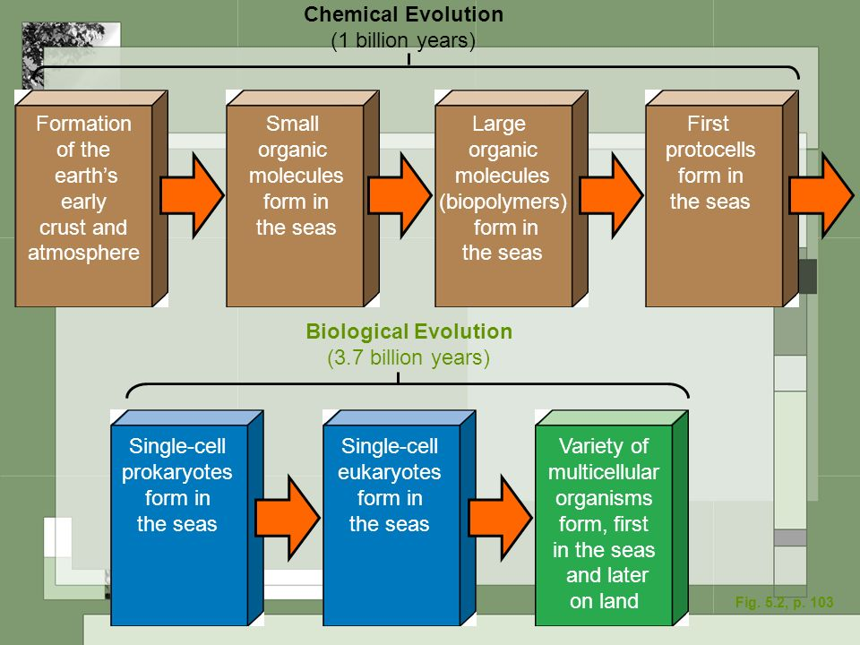 Chemical Evolution Biological Evolution