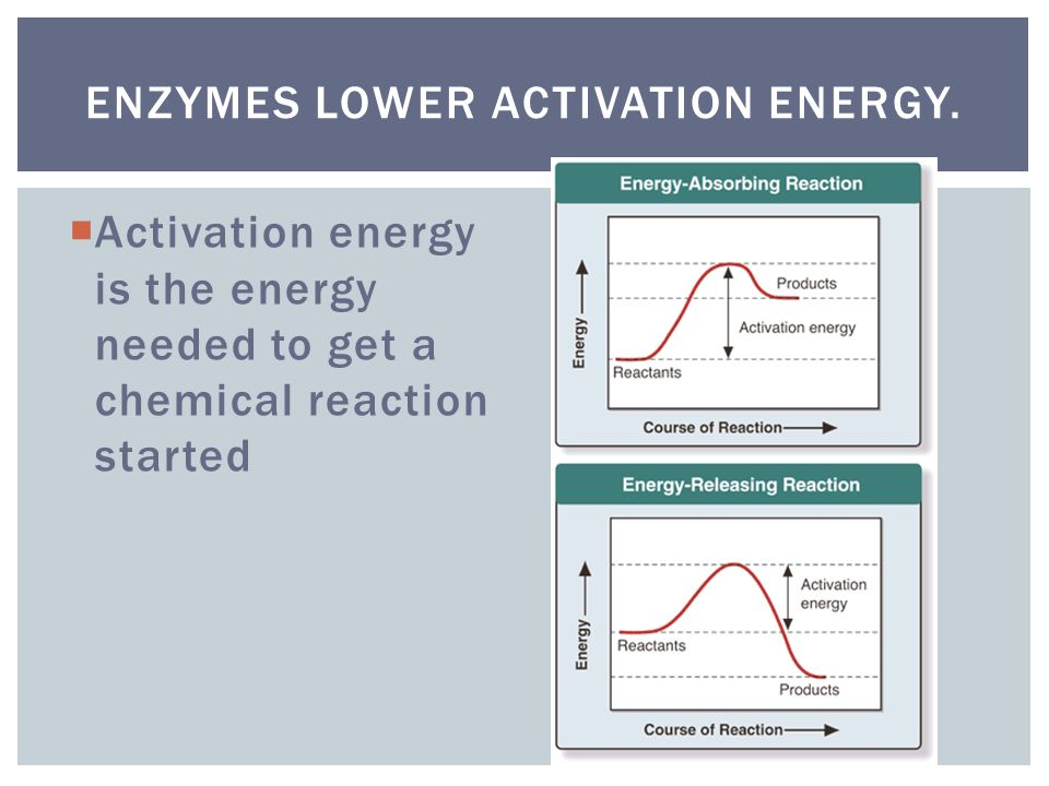 Enzymes lower activation energy.