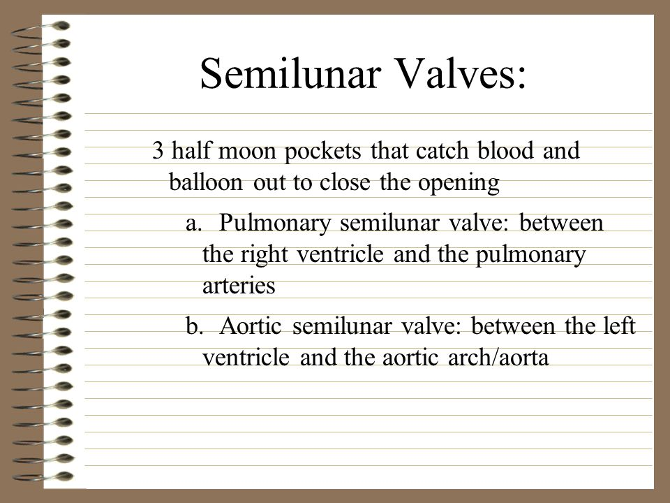 Semilunar Valves: 3 half moon pockets that catch blood and balloon out to close the opening.