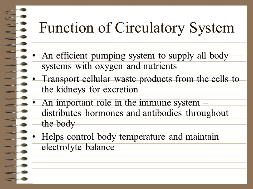 Function of Circulatory System