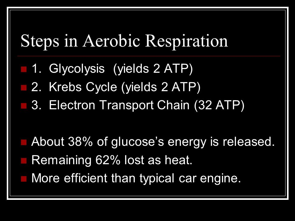 Steps in Aerobic Respiration