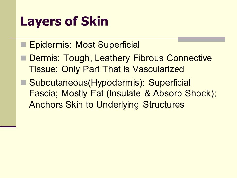 Layers of Skin Epidermis: Most Superficial