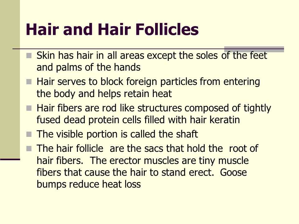 Hair and Hair Follicles