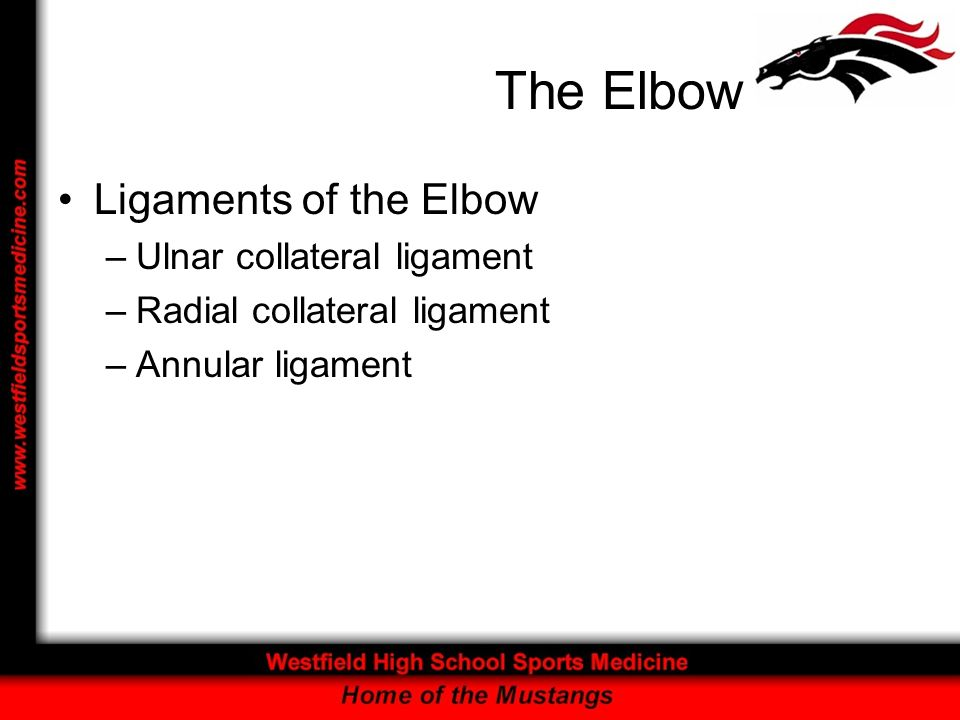 The Elbow Ligaments of the Elbow Ulnar collateral ligament