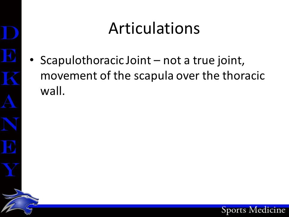 Articulations Scapulothoracic Joint – not a true joint, movement of the scapula over the thoracic wall.