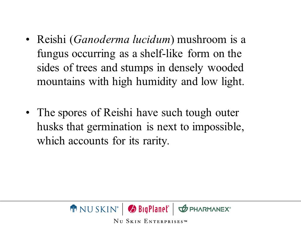 Reishi (Ganoderma lucidum) mushroom is a fungus occurring as a shelf-like form on the sides of trees and stumps in densely wooded mountains with high humidity and low light.