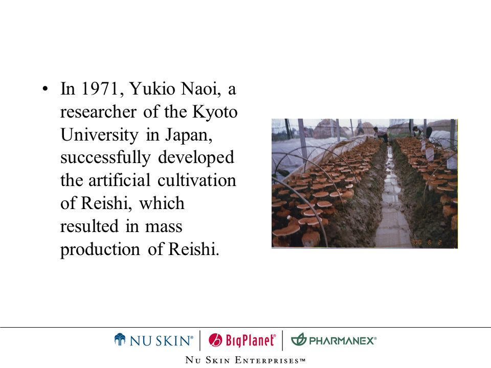 In 1971, Yukio Naoi, a researcher of the Kyoto University in Japan, successfully developed the artificial cultivation of Reishi, which resulted in mass production of Reishi.
