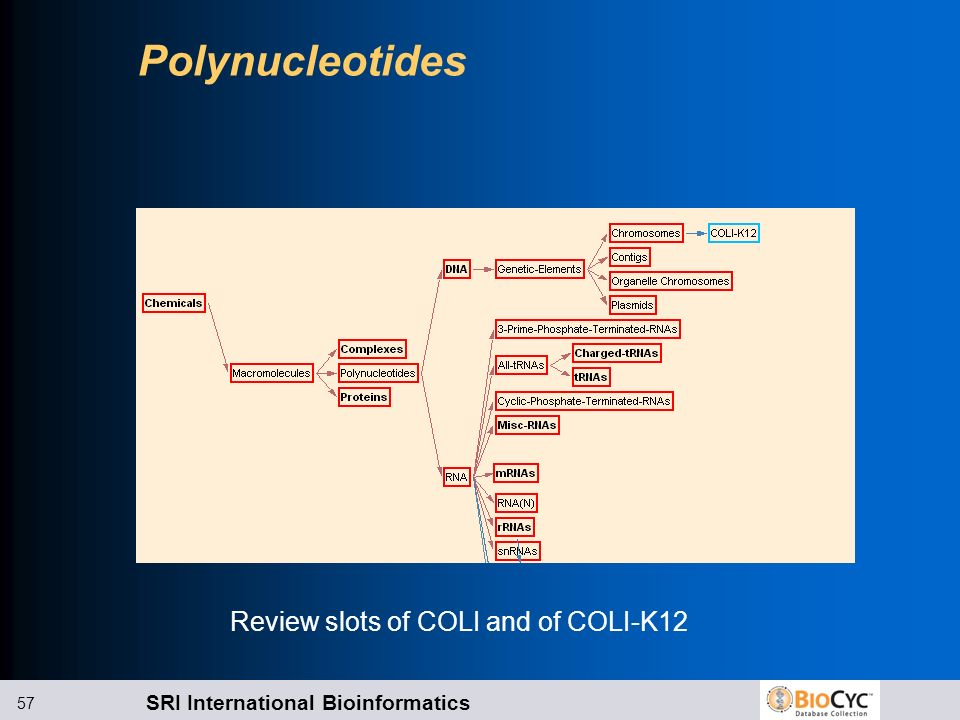 Review slots of COLI and of COLI-K12