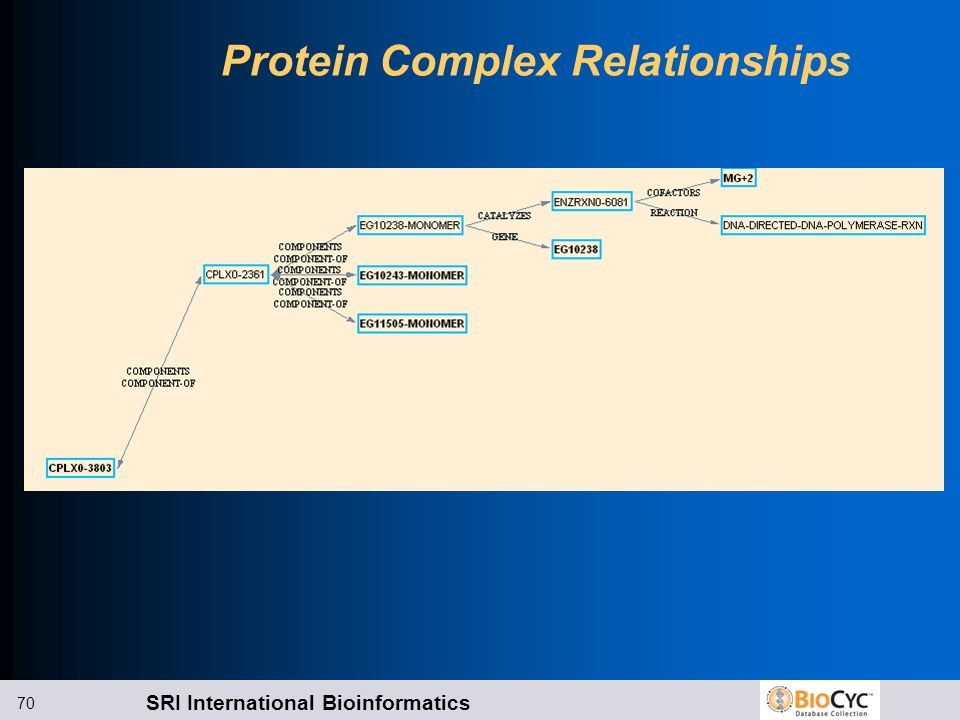 Protein Complex Relationships