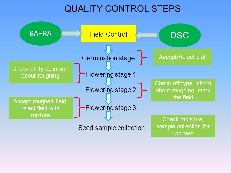 QUALITY CONTROL STEPS DSC BAFRA Field Control Germination stage