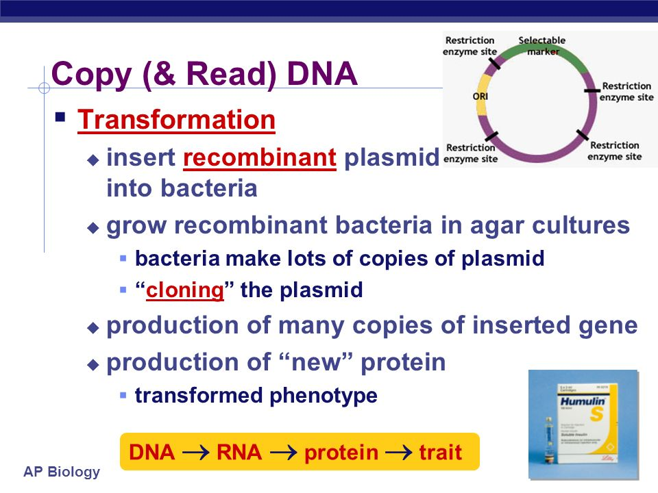 Copy (& Read) DNA Transformation