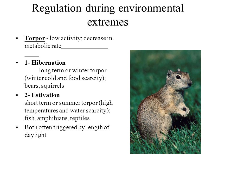 Regulation during environmental extremes