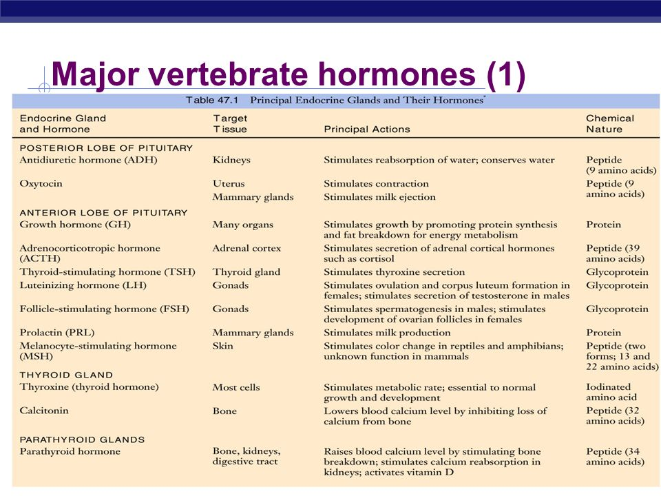 Major vertebrate hormones (1)