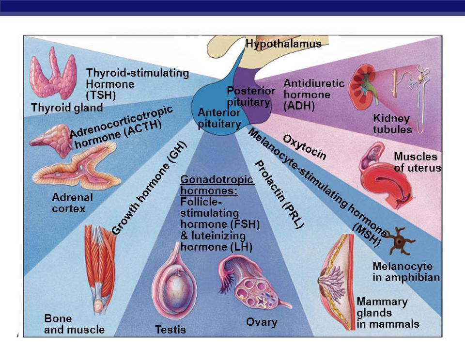 Melanocyte-stimulating hormone