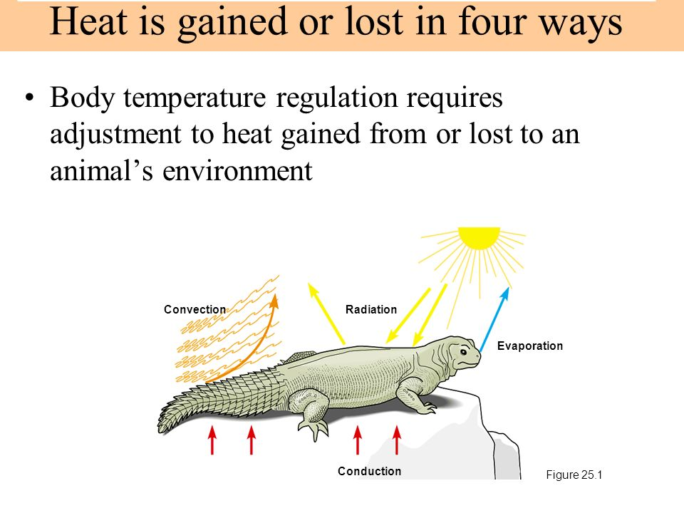 Heat is gained or lost in four ways