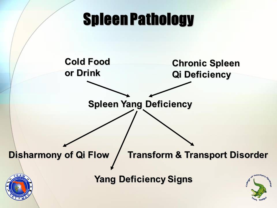 Spleen Pathology Cold Food or Drink Chronic Spleen Qi Deficiency