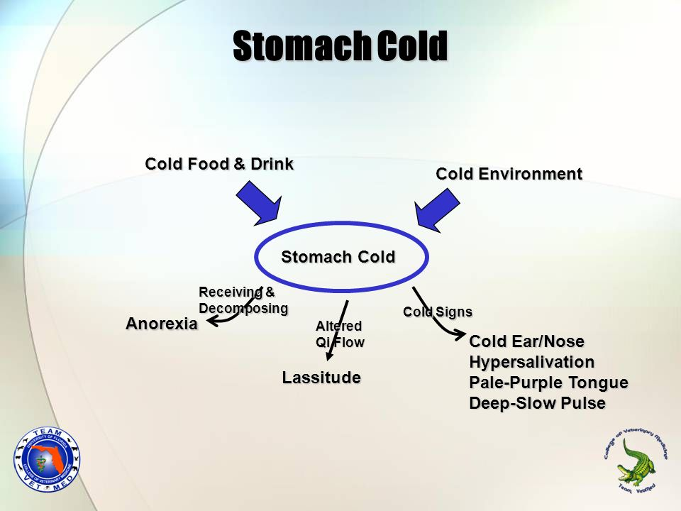 Stomach Cold Cold Food & Drink Cold Environment Stomach Cold Anorexia