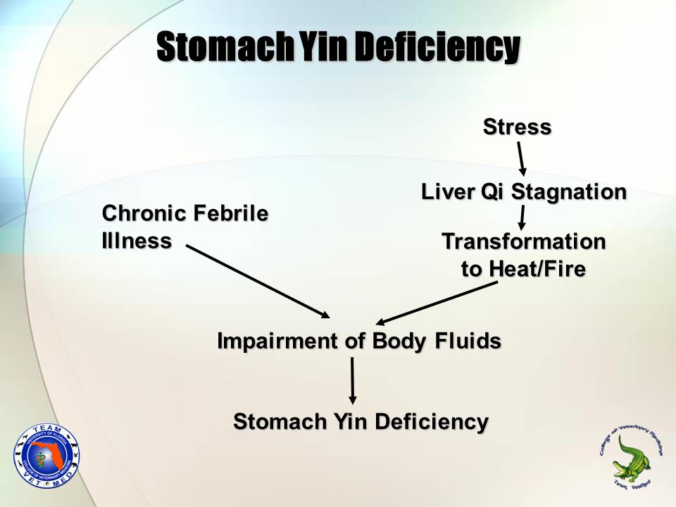 Stomach Yin Deficiency