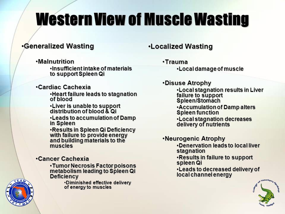 Western View of Muscle Wasting