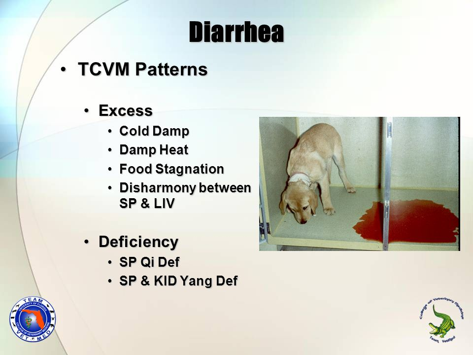 Diarrhea TCVM Patterns Excess Deficiency Cold Damp Damp Heat