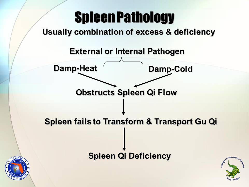 Spleen Pathology Usually combination of excess & deficiency