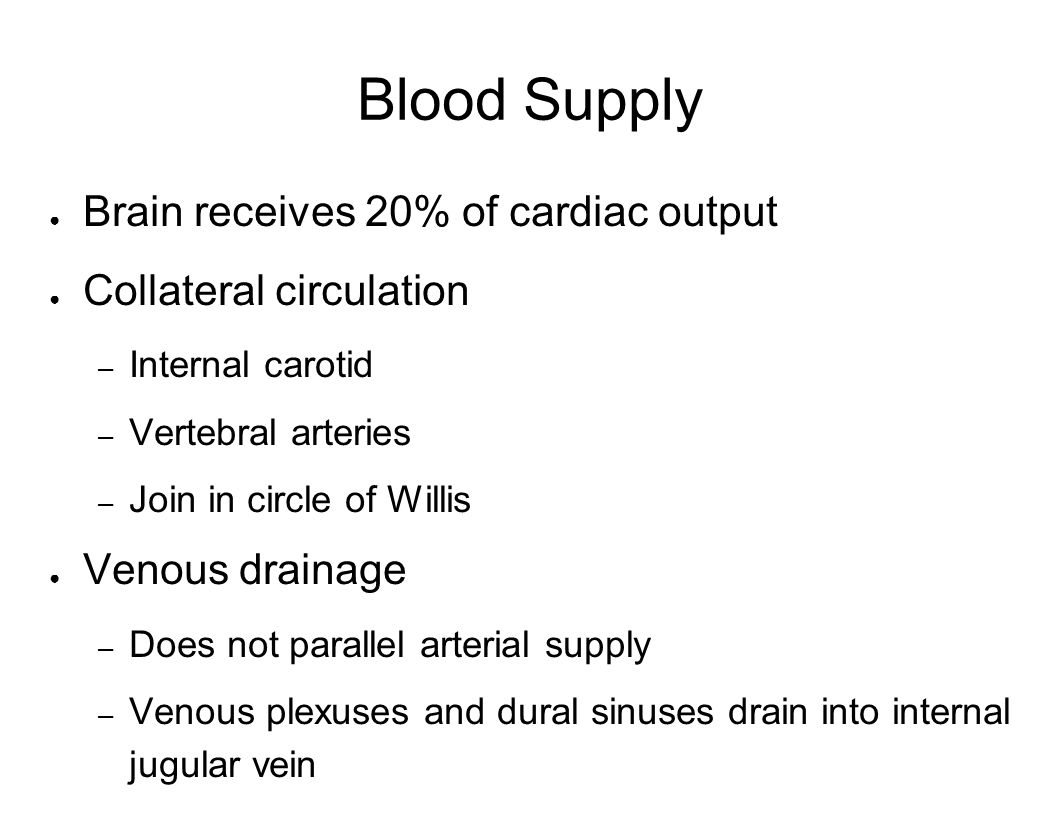 Blood Supply Brain receives 20% of cardiac output