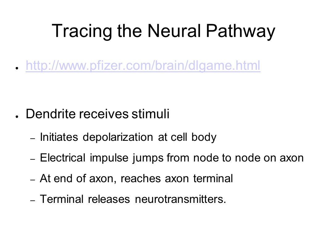 Tracing the Neural Pathway