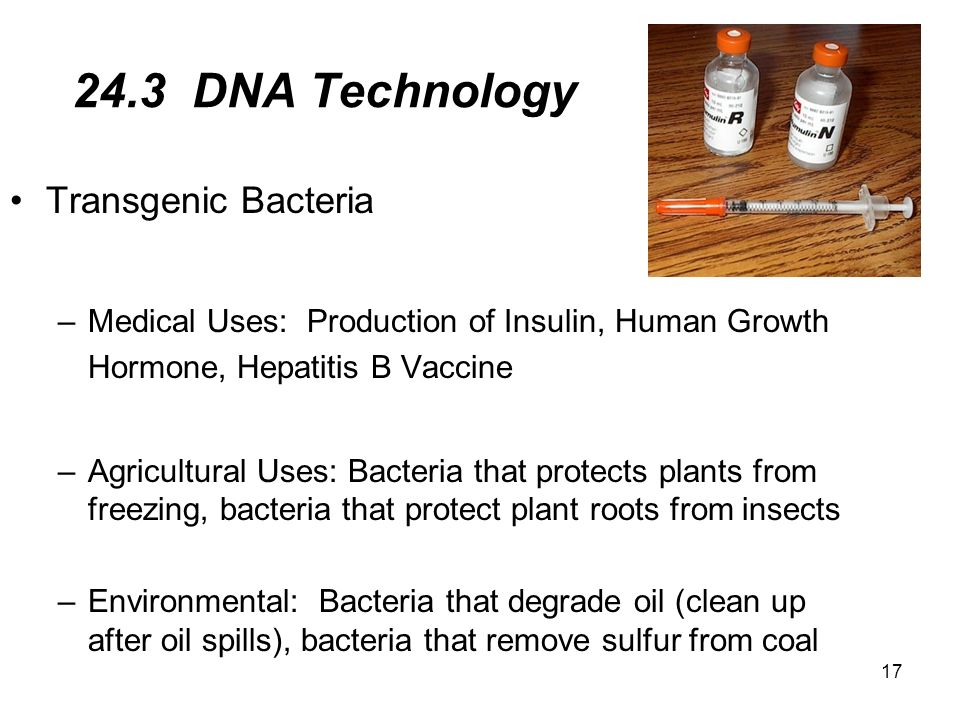 24.3 DNA Technology Transgenic Bacteria
