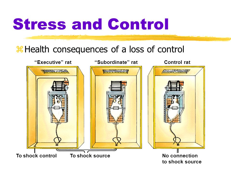 Stress and Control Health consequences of a loss of control