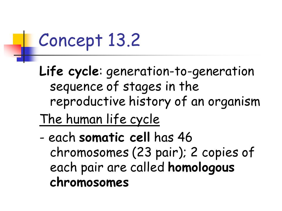 Concept 13.2 Life cycle: generation-to-generation sequence of stages in the reproductive history of an organism.