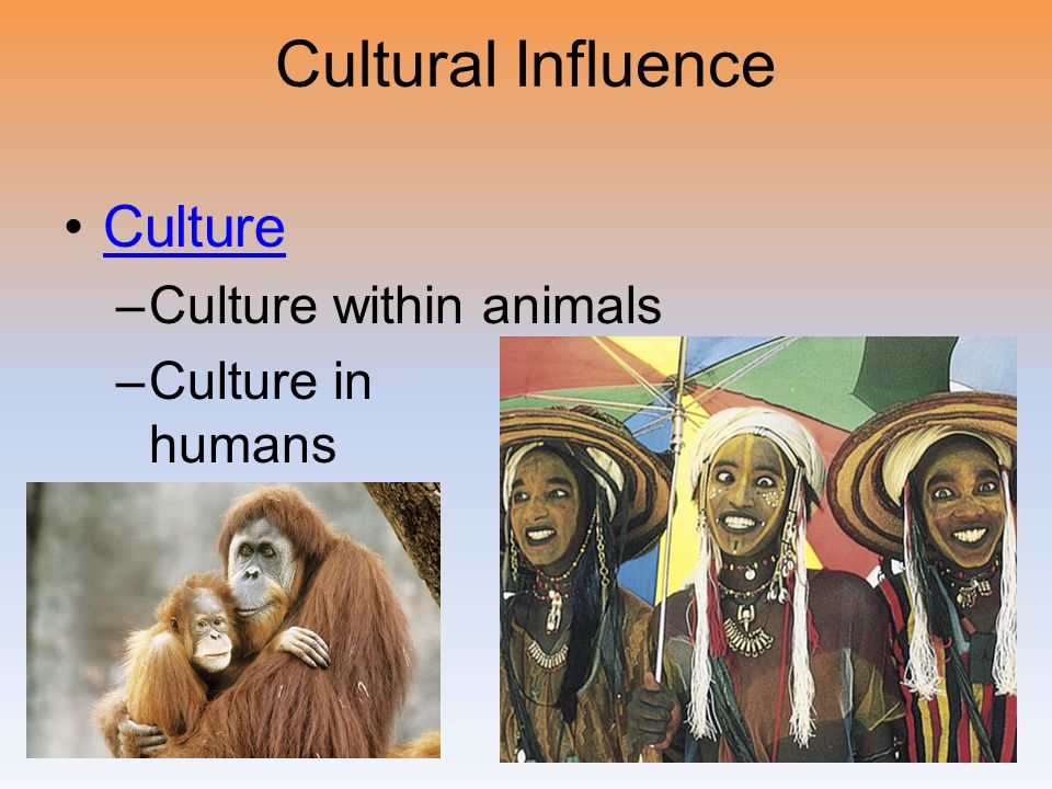 Cultural Influence Culture. Culture within animals.