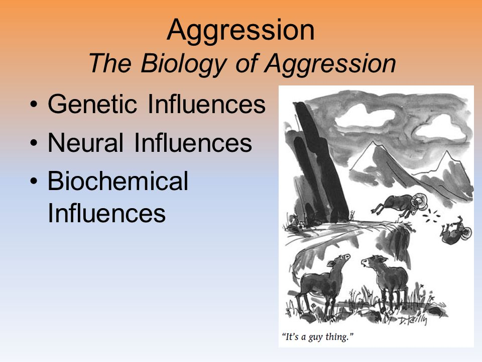 Aggression The Biology of Aggression