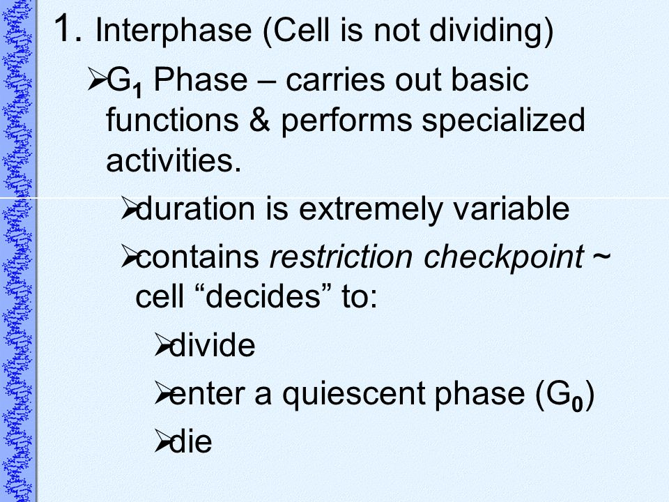 1. Interphase (Cell is not dividing)