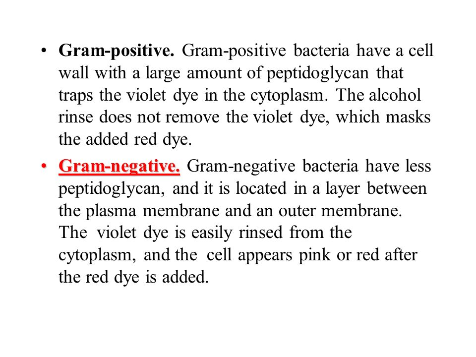 Gram-positive. Gram-positive bacteria have a cell wall with a large amount of peptidoglycan that traps the violet dye in the cytoplasm. The alcohol rinse does not remove the violet dye, which masks the added red dye.