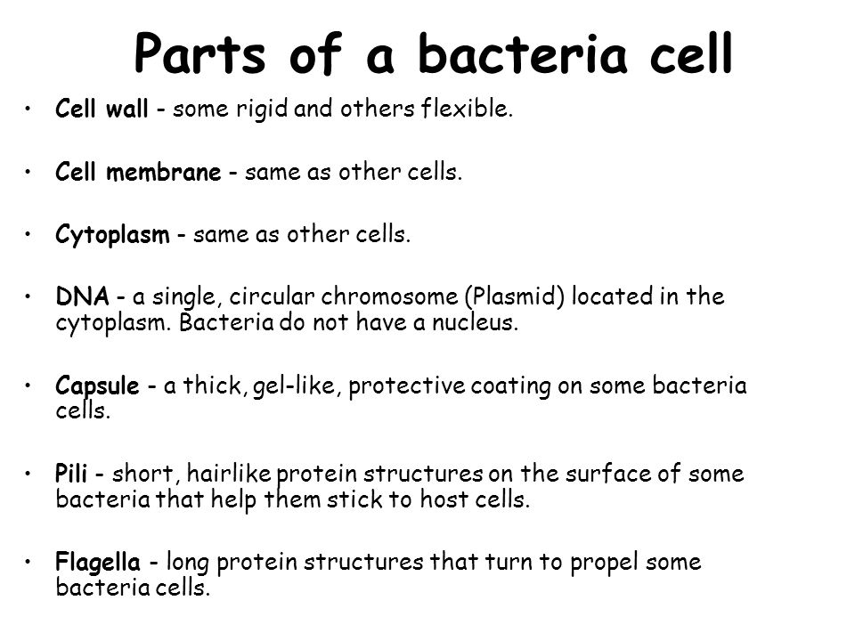Parts of a bacteria cell