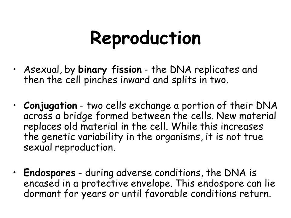 Reproduction Asexual, by binary fission - the DNA replicates and then the cell pinches inward and splits in two.