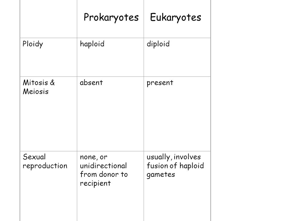 Prokaryotes Eukaryotes PROKARYOTES EUKARYOTES a) Size 1-10 microns