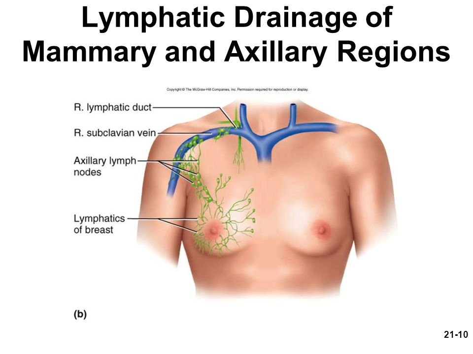 Lymphatic Drainage of Mammary and Axillary Regions