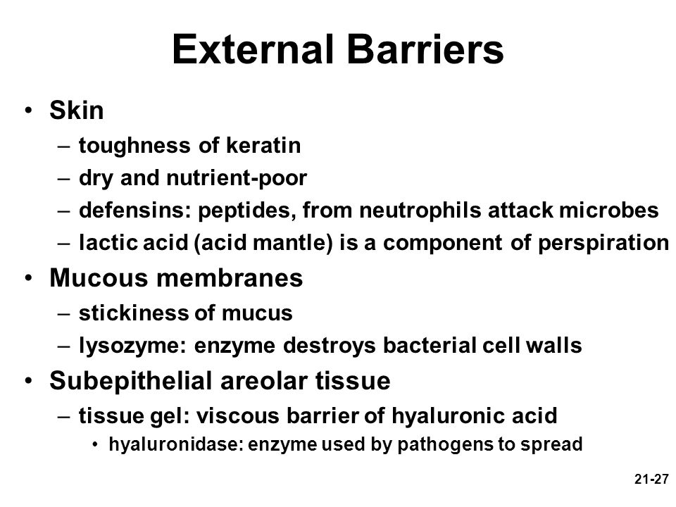 External Barriers Skin Mucous membranes Subepithelial areolar tissue
