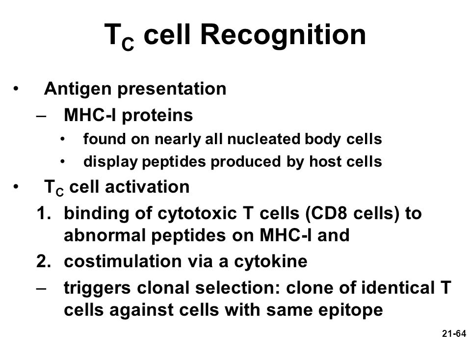 TC cell Recognition Antigen presentation MHC-I proteins