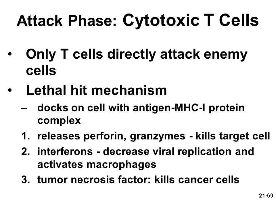 Attack Phase: Cytotoxic T Cells