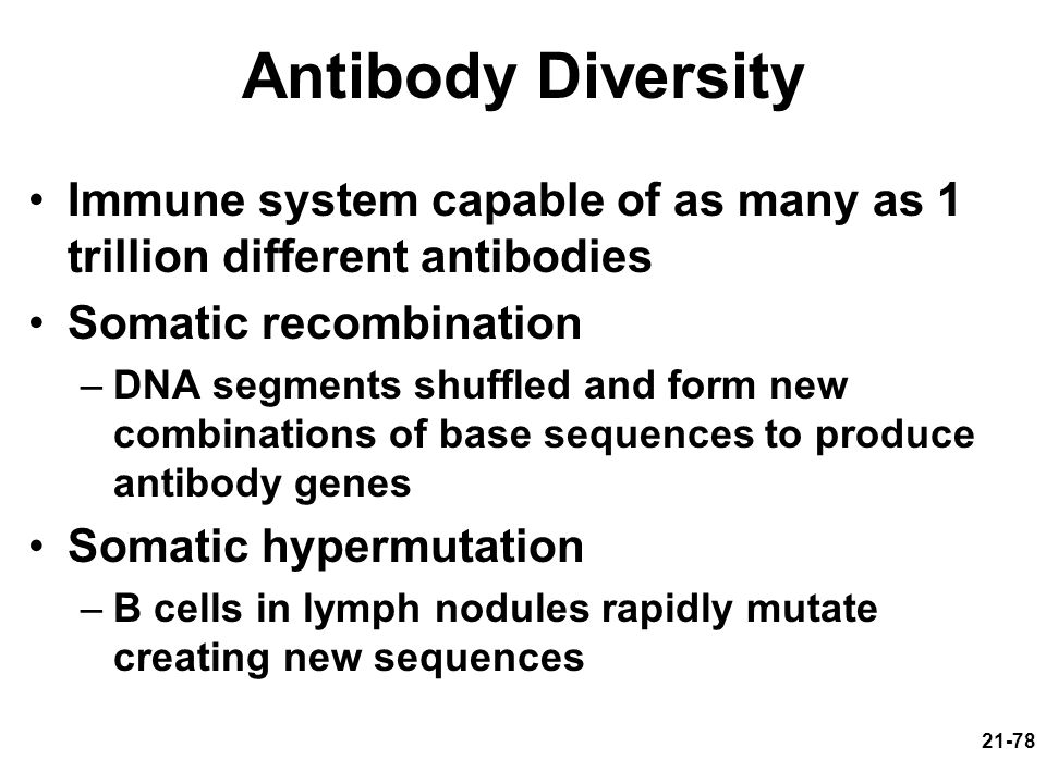 Antibody Diversity Immune system capable of as many as 1 trillion different antibodies. Somatic recombination.