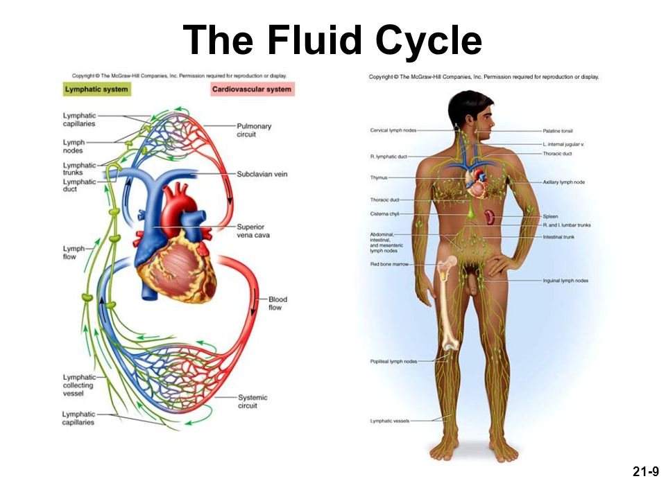 The Fluid Cycle