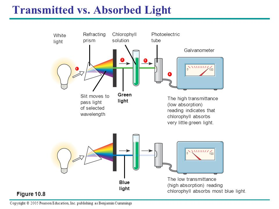 Transmitted vs. Absorbed Light