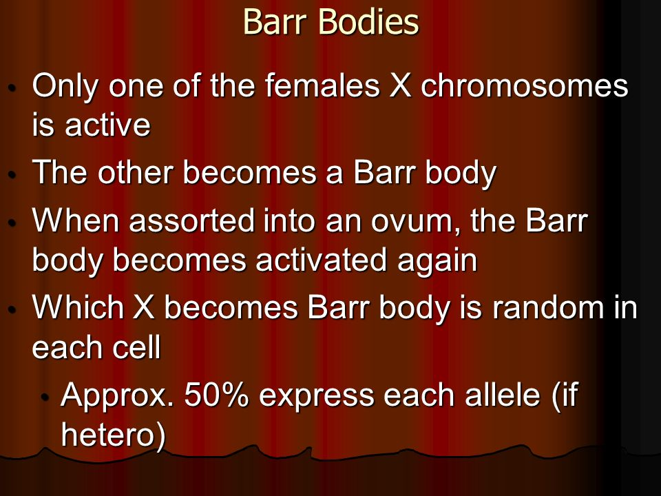 Barr Bodies Only one of the females X chromosomes is active